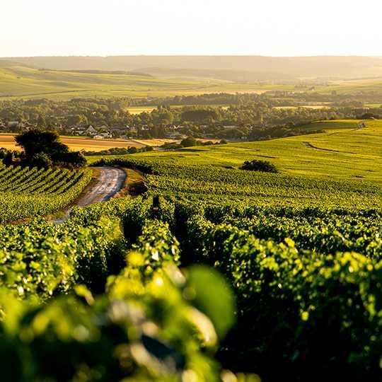 Vignoble de Chouilly avec points de vue sur la Côte des Blancs
