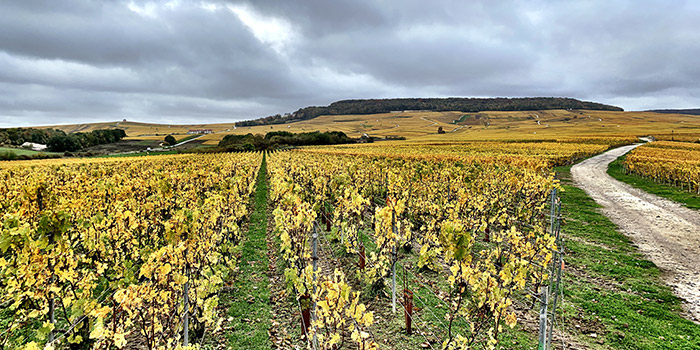 Photo de jean-pierre Vazart de ses vignes en Automne 2020 à Chouilly en Champagne